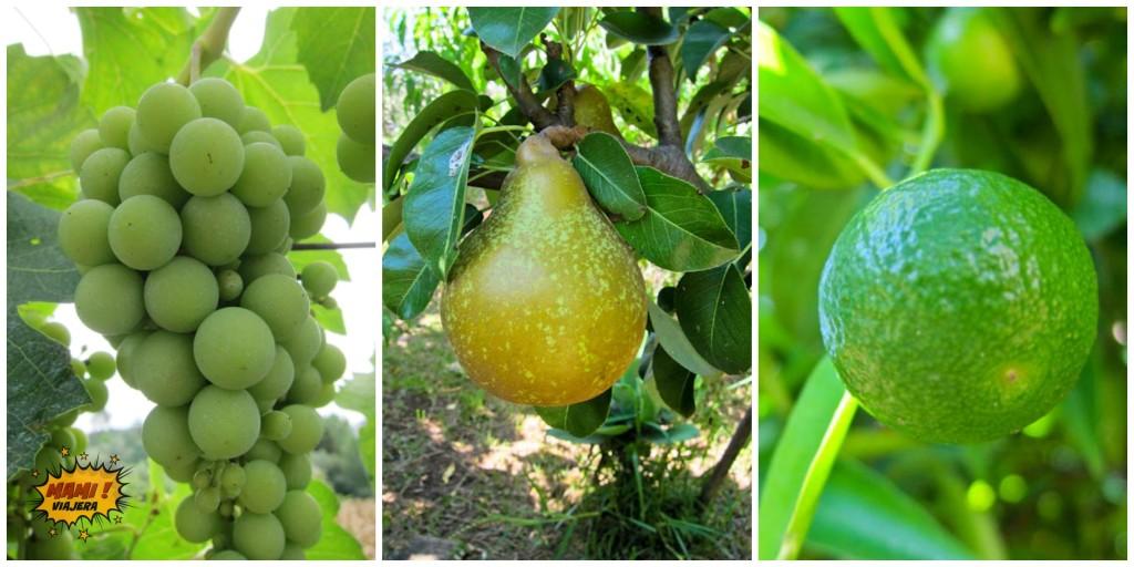 frutas-albergaria