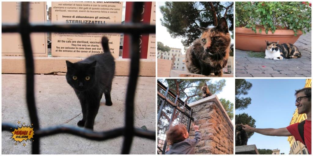 refugio-de-gatos-roma