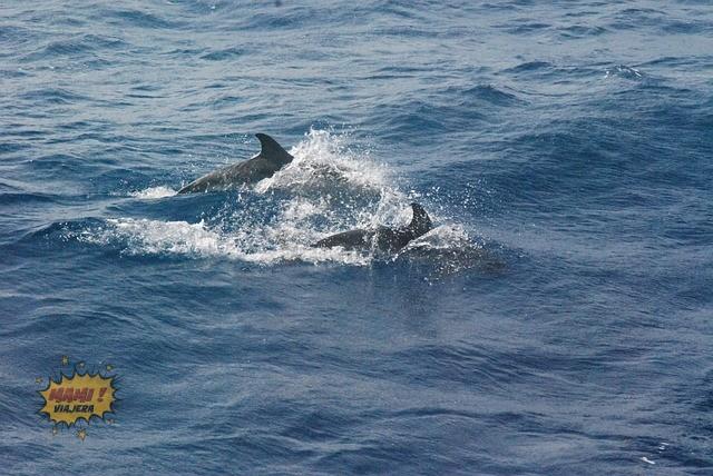 delfines algarve
