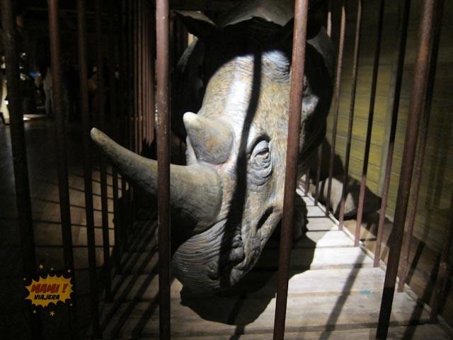A veces llevaban cosas tan partculares como un rinoceronte. Regalos exóticos para reyes y mandatarios